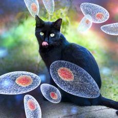 Kedilerden İnsanlara da Geçebilen Tehlikeli Parazit Toksoplazma'nın İnanılmaz Adaptasyonu