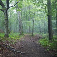 Yağmurdan Sonra Gelen Toprak Kokusunun Sebebi Nedir?