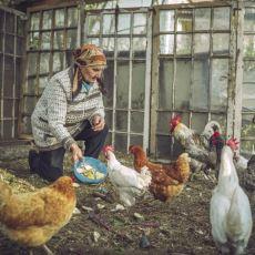 Yumurta Almak Yerine Tavuk Bakan Bir Ekşi Sözlük Yazarının Tavsiyeleri