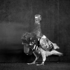 Drone'un Olmadığı Yıllarda Kullanılan İlginç İcat: Güvercinli Fotoğraf Makinesi