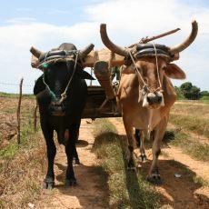 Tarım Devrimiyle Beraber Başlayan Yeni Dönemin İnsanları Nasıl Aptallaştırdığına Dair İlginç Bir Yazı