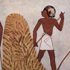 Buğday, Kendini Dünyanın Efendisi Sanan İnsan Türünü Nasıl Evcilleştirdi?