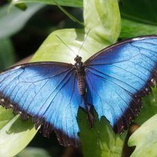 Doğada Mavi Renk Neden Az Bulunur?
