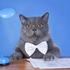 Eve Kedi Alırken Onlarla Mülakat Yapma Şansımız Olsaydı Ortaya Nasıl Diyaloglar Çıkardı?