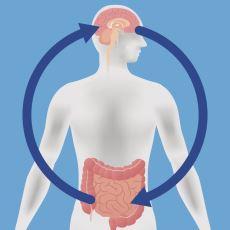 Bağırsaktaki Bakteriler Beynimizin Kimyasını Gerçekten Etkiliyor mu?