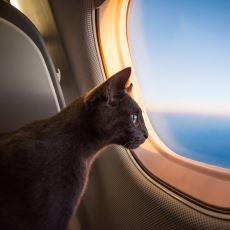 Kedi ile Uçak Yolculuğu Yapacaklara Hayat Kurtarıcı Tavsiyeler