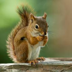 Hayvanlar Hakkında Sebepsiz Yere Mutlu Eden Kıymetli Bilgiler