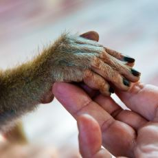 İnsan Maymundan Geldiyse Bugünkü Maymunlar Neden İnsan Olmuyor?