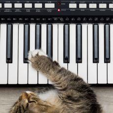Çıkardıkları Seslerle Bazı Bilim Adamları Tarafından Müzik Yapıyor Olarak Kabul Edilen Hayvanlar