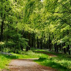 Ormanların Dünya ve İnsan Hayatı İçin Ne Kadar Değerli Olduğunu Gösteren Detaylar