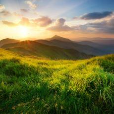 İnsan Irkı Doğadan Bir Anda Yok Olsa Ne Gibi Değişiklikler Olur?