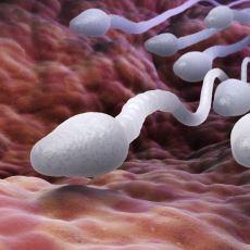 Penisten Çıkan Spermin Gebe Kalmayı Sağlayan Uzun ve Zorlu Yolculuğu