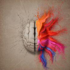 Kafatasımızın İçinde Aslında Birbirinden Ayrı Bilince ve Zekaya Sahip İki Farklı Beyin Taşımamız