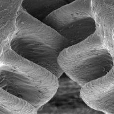 Makinelerde Kullanılan Dişli Çark Yapısının Doğada Halihazırda Bulunması