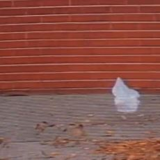 Yıllar Geçse de Unutulmayan Bir Film Sahnesi: American Beauty'deki Uçuşan Torba