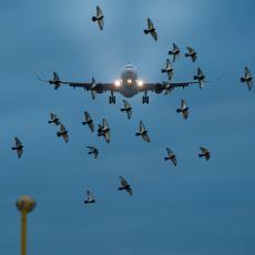 Kuş Girmesin Diye Uçak Motorlarının Önüne Neden Tel Kafes Koyulmuyor?