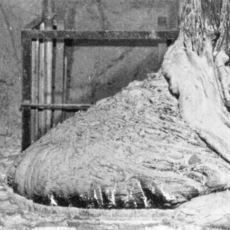 Yanında 2 Dk Kalınması İç Kanamaya Sebep Olan Çernobil Kalıntısı: Elephant's Foot
