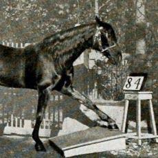 20. Yüzyıl'da Matematik İşlemlerine Tepkilerle Yanıt Verebilen Bir At: Akıllı Hans