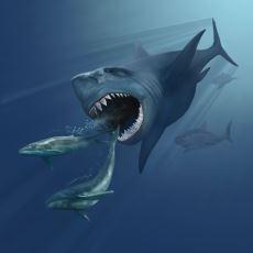 Balinayla Beslenen ve Tam 60 Ton Ağırlığındaki Gelmiş Geçmiş En Büyük Köpekbalığı: Megalodon
