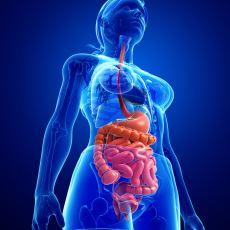 Tıpta Ciddi Bir Tedavi Olarak Kullanılan Dışkı Verme İşlemi: Fekal Transplantasyon