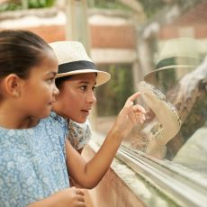 Evrim Teorisine Dair İlginç Bir Araştırma: Beyindeki Yılan Tanıma Teorisi