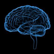 İnsan Kalp Durduğunda mı Yoksa Beyin Durduğunda mı Ölür?