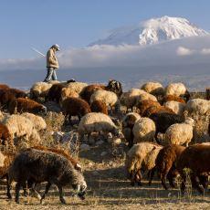 Çobanlık ile İlgili Okurken Kendinizi Dağda Bayırda Hissedeceğiniz İç Isıtan Bir Yazı