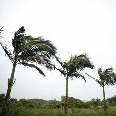 Basit Bir Doğa Olayı Olan Rüzgarın Aslında Toplumların Hayatını Şekillendiren Bir Güç Olması