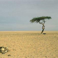 Sahra Çölü'ndeki Dünyanın En Yalnız Ağacı Tenere'nin Hüzünlü Hikayesi