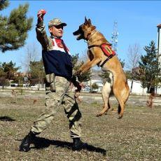 Bir Askerin, Görevi Boyunca Hamile Bir Köpekle Kurduğu Duygulandıran Hikaye