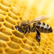 Arı Petekleri Neden Altıgen Şeklindedir?