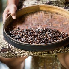 Dünyanın En Pahalı Kahvelerinden: Kedi Dışkısından Ayıklanan ve Fincanı 100 $'lık Kopi Luwak