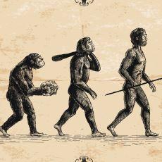 """Evrim Teorisi Neden Hâlâ """"Kanun"""" Yerine Teori Olarak Adlandırılıyor?"""