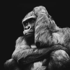 İnsanın Kendine Has Vasıflarını Başka Varlıklara da Yüklemesi: Antropomorfizm