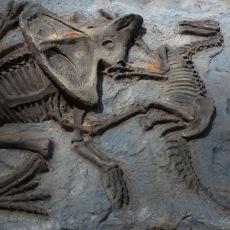 Türkiye'de Neden Hiç Dinozor Fosili Bulunmuyor?