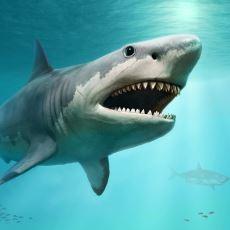 Köpekbalıkları Neden Sürekli Yüzmek Zorundadır?