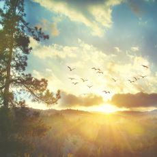 İsveççede Doğaya Dair Şiir Gibi Bir Kelime: Gökotta