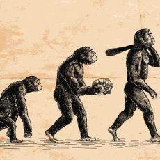 Zaman Zaman Birbirine Karıştırılan Teori ve Kanun Arasındaki Farklar