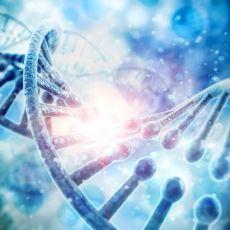 Bilim İnsanlarının DNA Değişimiyle Yarattığı Yeni Canlı Türleri İnsanlık İçin Ne Anlam İfade Ediyor?