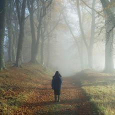 Filmlerin Klasiği Olan, İnsanların Büyük Bir Ormandan Çıkmak İsterken Sürekli Aynı Yerde Dolaşmasının Sebebi