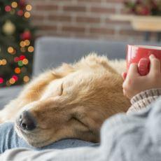 Köpek Sahiplenmek İsteyenlerin Göz Önünde Bulundurması Gereken En Temel Noktalar
