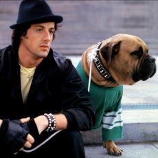 Çocukluğumuzun Kahramanı Sylvester Stallone'nin Saygı Duyulacak Başarı Hikayesi
