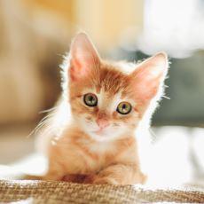 Sevmeye Doyamadığımız Kedilere Bambaşka Bir Gözle Bakmanızı Sağlayacak Yeni Bulgular