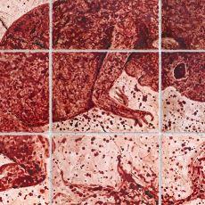 Yaratıcılığın Sınırlarını Zorlamanın En İyi Örneklerinden: 9 Aylık Regl Kanı İle Çizilmiş Resim