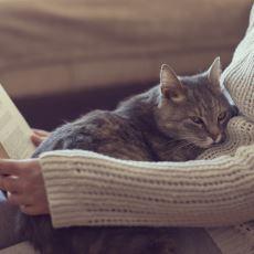 Evcil Hayvanlar, Sahipleri Öldüğünde Onları Neden Yer?