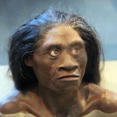 1 Metrelik Boy Ortalamalarıyla Hobbit'lerin Atası Denen Tür: Homo Floresiensis