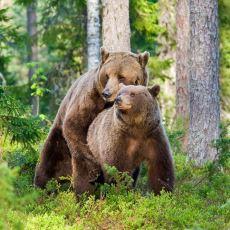 Seks ve İnsan Evrimini Uzun Uzun Düşündüren Tespit: Tüm Hayvanların Erken Boşalması