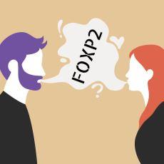 İnsana Konuşma Yetisini Kazandıran Gen: FOXP2