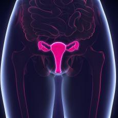 Penis ve Klitorisin Evrimine Dair Merak Edilenler