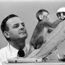 Hayvan Derneklerinin Ayaklanmasına Neden Olan Sahte Anne Maymun Deneyi